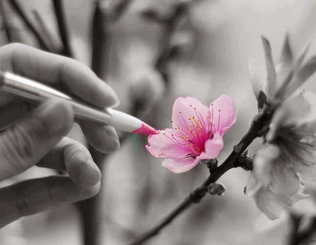 color pink spring flowers - colorer de rose les fleurs du printemps