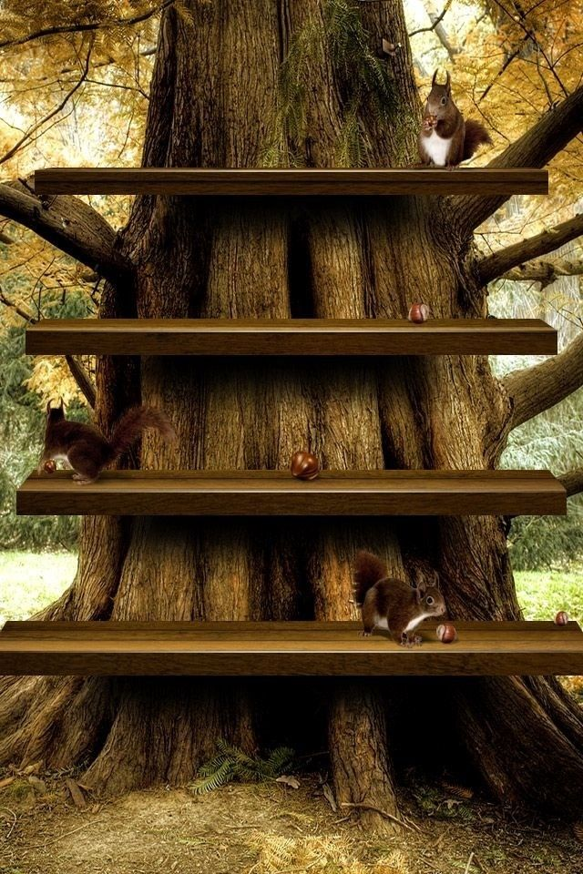 Tree Shelf Home Screen Wallpaper Wallpaper Shelves Home