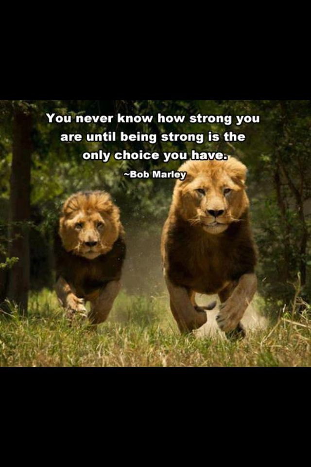 Strength Bob Marley Quote With Images Lion Pictures Animals