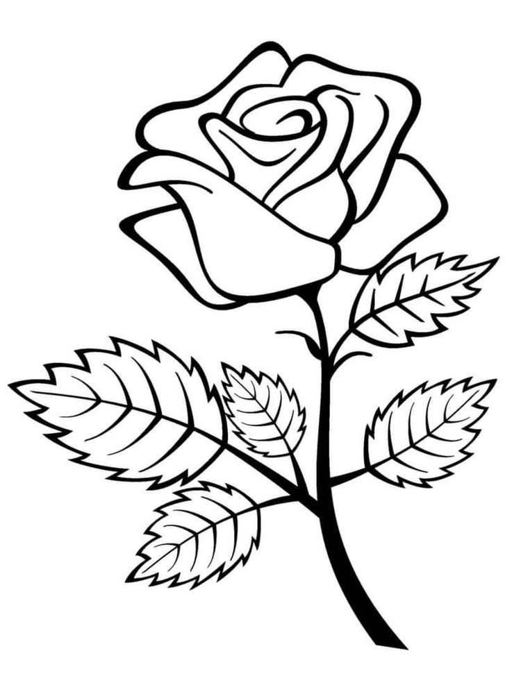 Rose Color Page Roses Drawing Rose Coloring Pages Flower Drawing