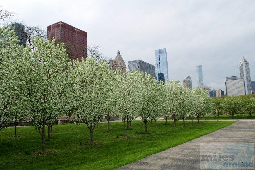 Chicago Citypass Freier Eintritt Bei Vielen Sehenswurdigkeiten In Chicago Chicago Reiseziele Nordamerika