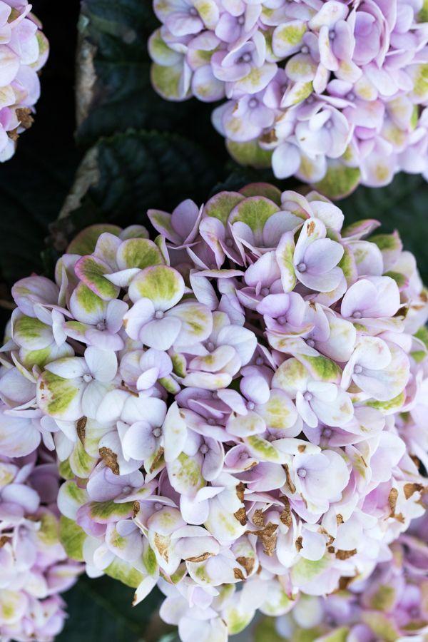 9 tips til blomster og krydderurter i krukker og potter