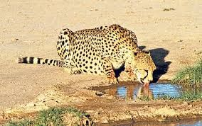 Image result for Africa Photos
