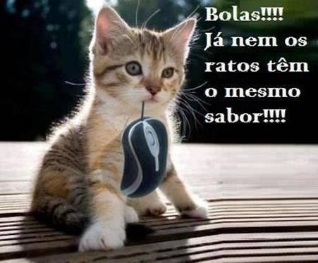Até os gatos sentem a troika XD  Veja mais em: http://www.jacaesta.com/ate-os-gatos-sentem-a-troika-xd/