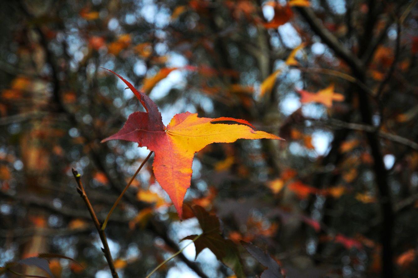 #otoño #fotografia #hojas #fotografiadepaisaje #barbaraomil