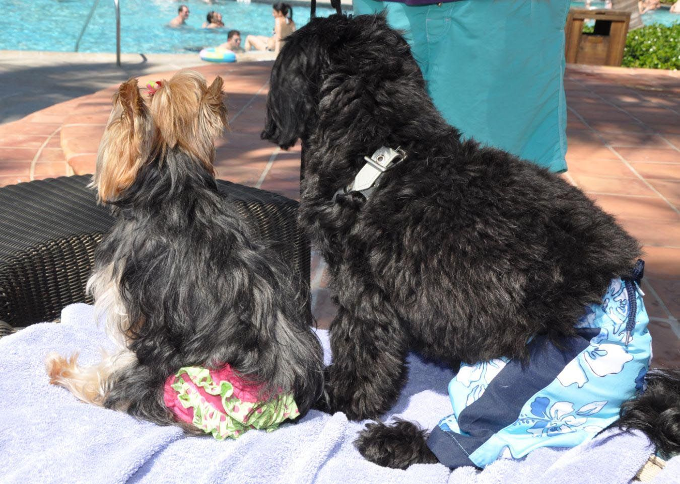 Millie and I were in San Juan at the pool and were allowed