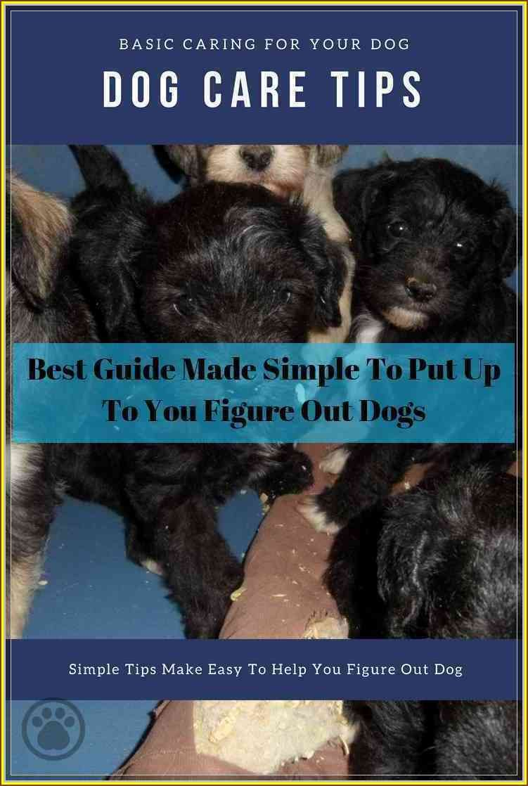 Follow This Great Dog Care Guide To Help You Dog Care Dog