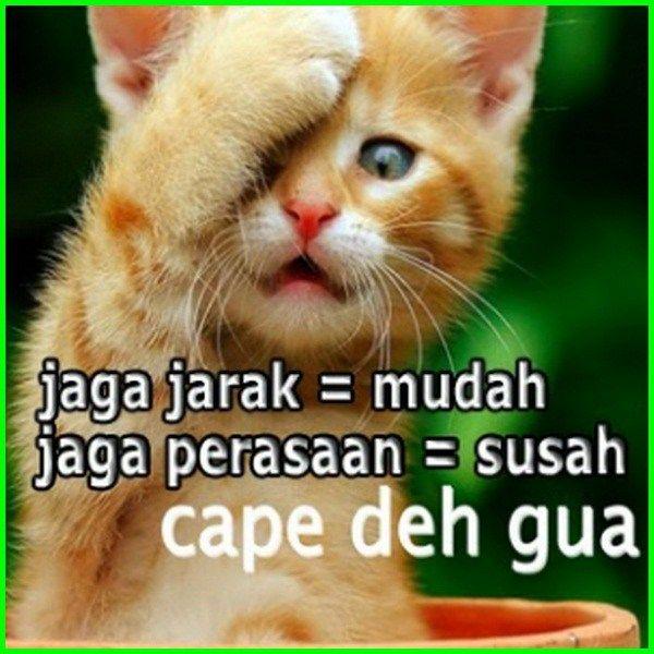 Gambar Kucing Lucu Imut Dan Paling Menggemaskan Sedunia Cartoon Jokes Lucu Gambar Kucing Lucu
