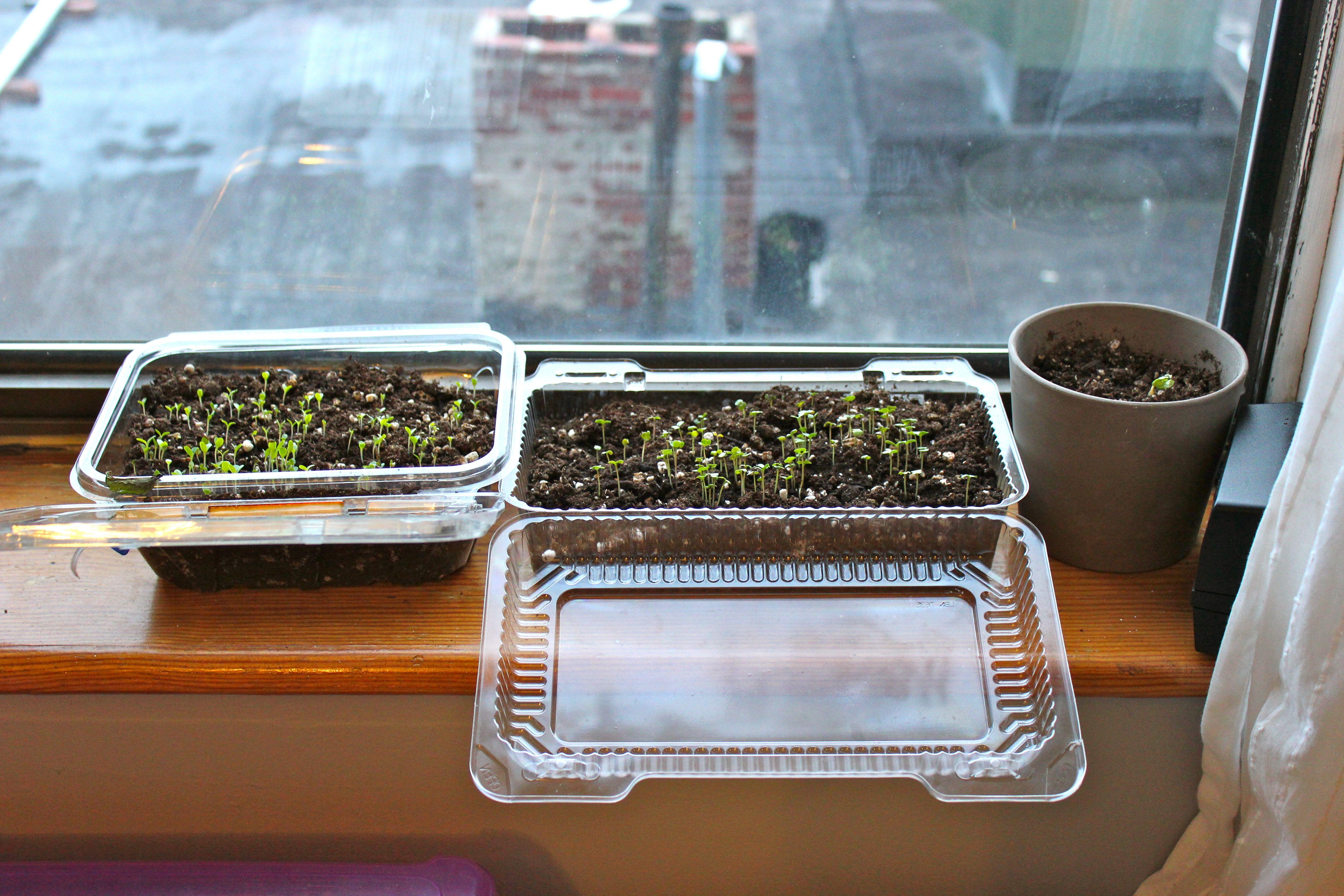 How To Grow Seeds Indoors Growing Seeds Survival Gardening Heirloom Vegetables