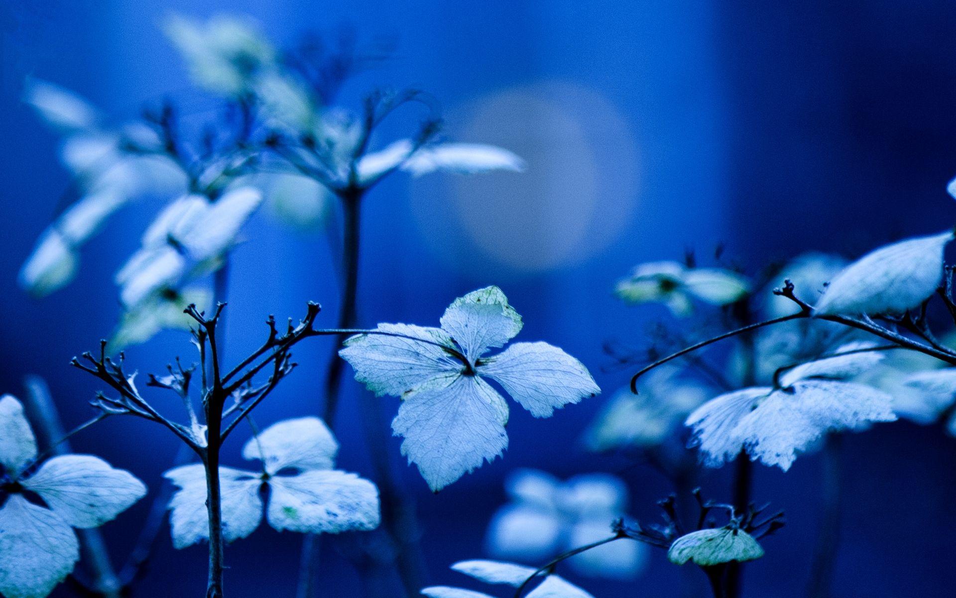 Blue Garden Okc Hd Wallpaper Blue Garden Plants Free Plants