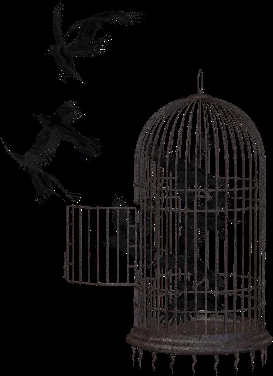 λευκό πουλί εικόνεςμαντίλα πορνό