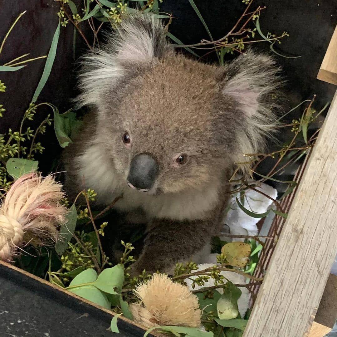 "RSPCA Australia on Instagram ""Update from dedicated team"