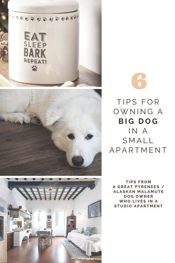 Big dog & small apartment? WOOF. Here are some tips ...
