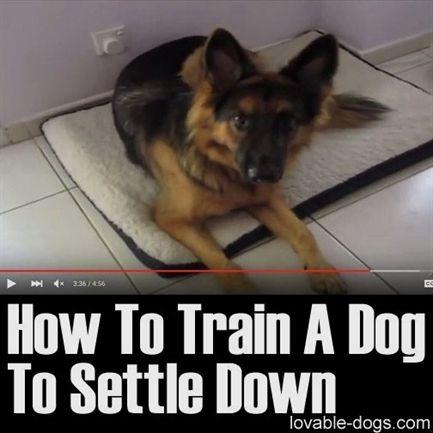 Dog Training In Atlanta Petsmart Dog Training Prices Dog