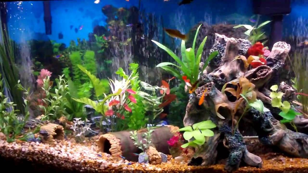 Best Fish Tank Aquarium I Ever Created Beautiful Freshwater Aquarium Fish Cool Fish Tanks Fish Tank Themes