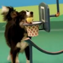 Video New Dog Food Ad Goes All Rube Goldberg Ftw Very Cool