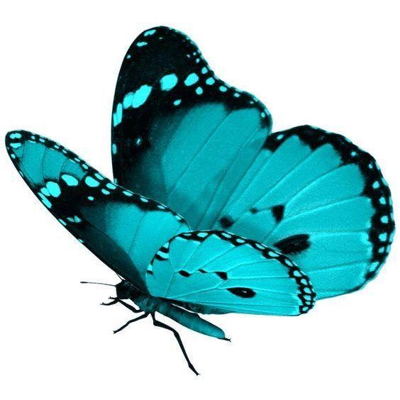 28 Nice Aqua Color Tattoos: Mariposas Pintadas