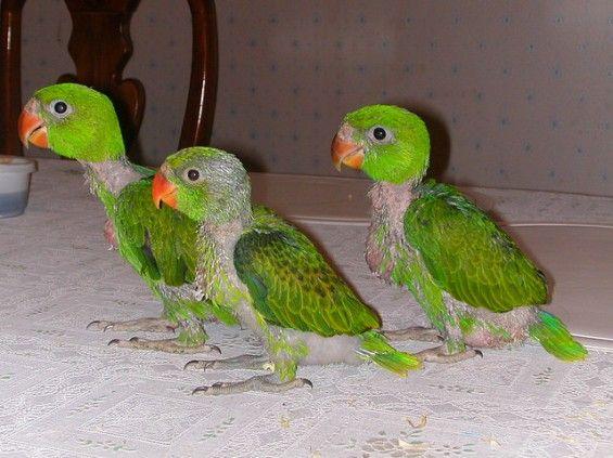 Parrots Name Their Babies Parrot Pet Parrot Pet Birds