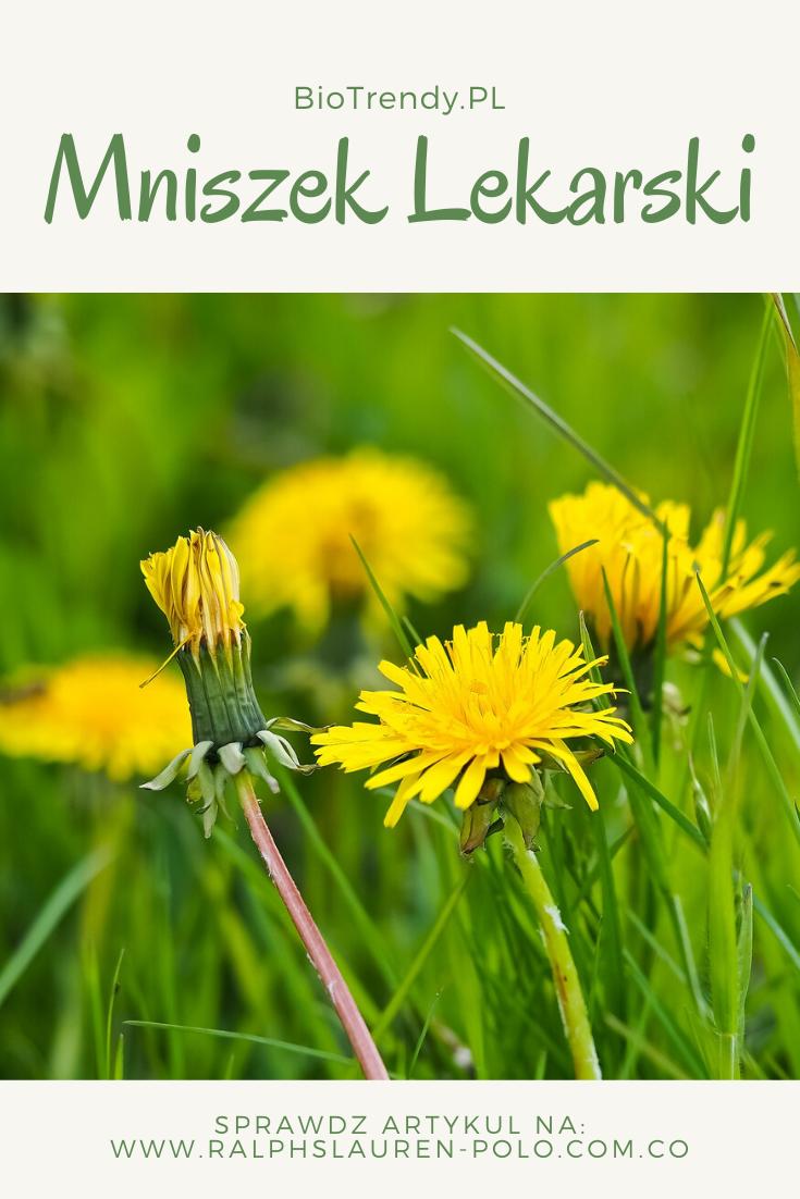Mniszek Lekarski Wlasciwosci I Przeciwwskazania Herbs Dandelion Plants