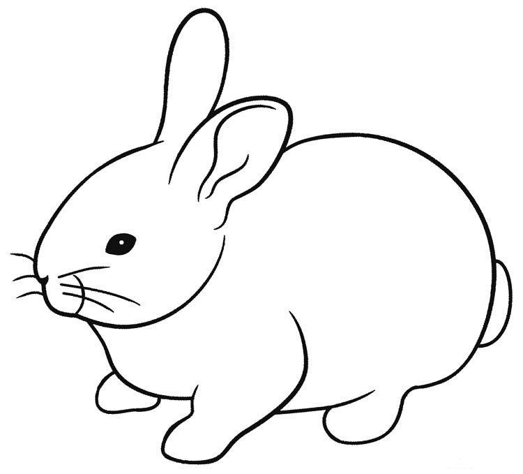 Pin Oleh Daniela Vasile Di Farm Animals Kartun Gambar Kelinci Gambar Hewan