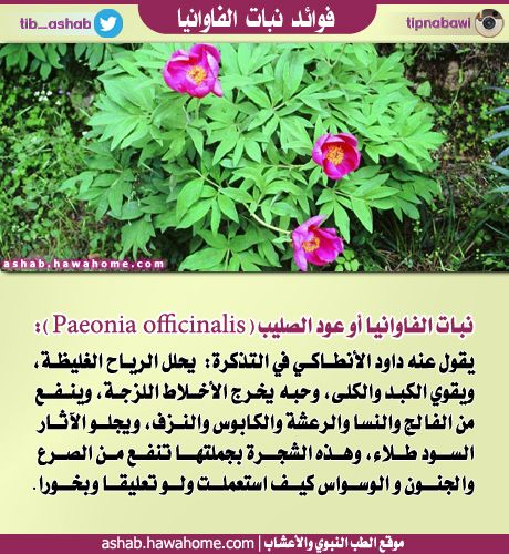 فوائد نبات الفاوانيا الطب النبوي والاعشاب Surgeon Lei Necklace