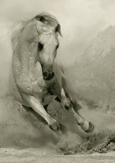 Amazing Photographs Of Horses 20 Pictures Horses Andalusian Horse Pretty Horses