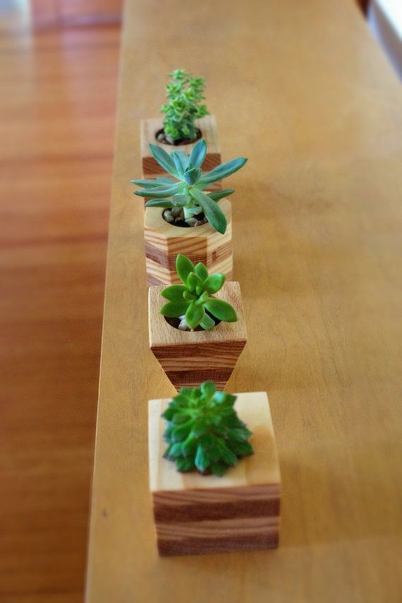 Jardineras de madera geom tricas suculentas por for Wooden cactus planter