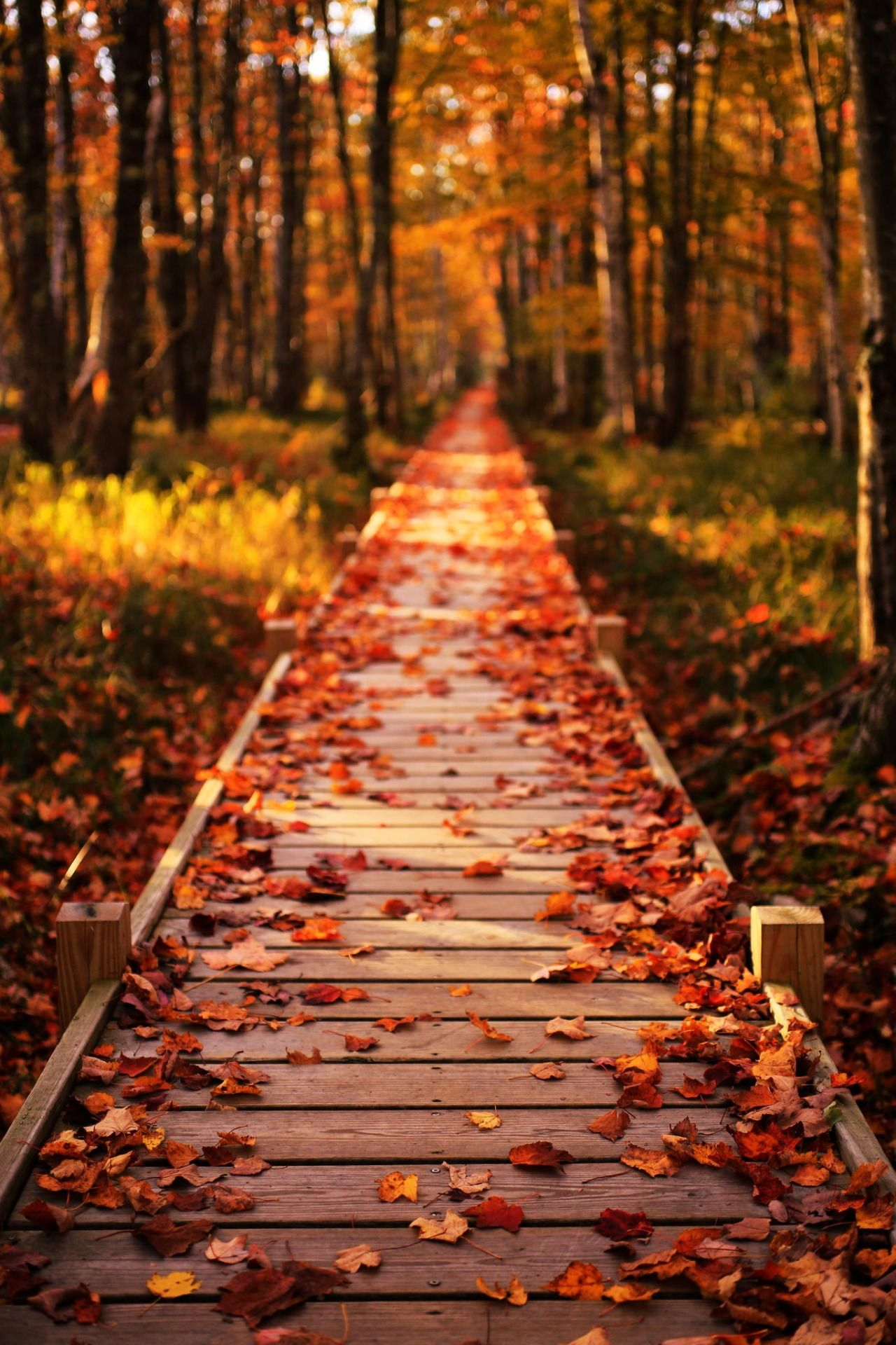 Awesome walking path | Fall background, Fall wallpaper, Autumn ...