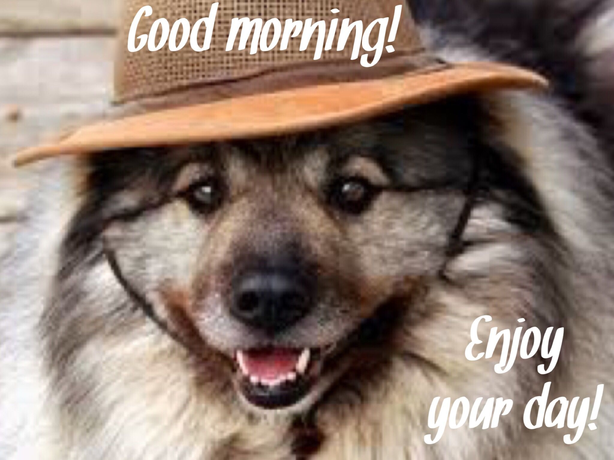 Pin by Pat Lyon on Good morning and more | Keeshond puppy ...