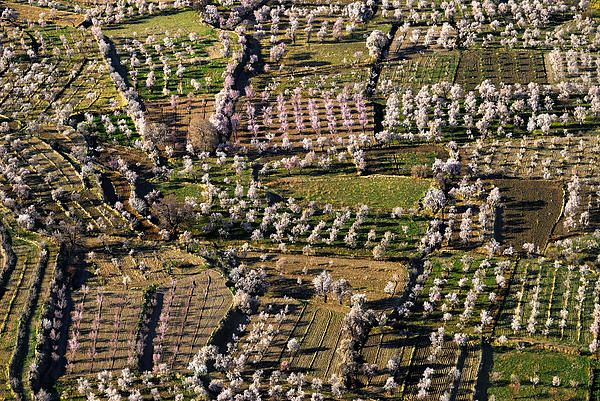 Almonds From The Air