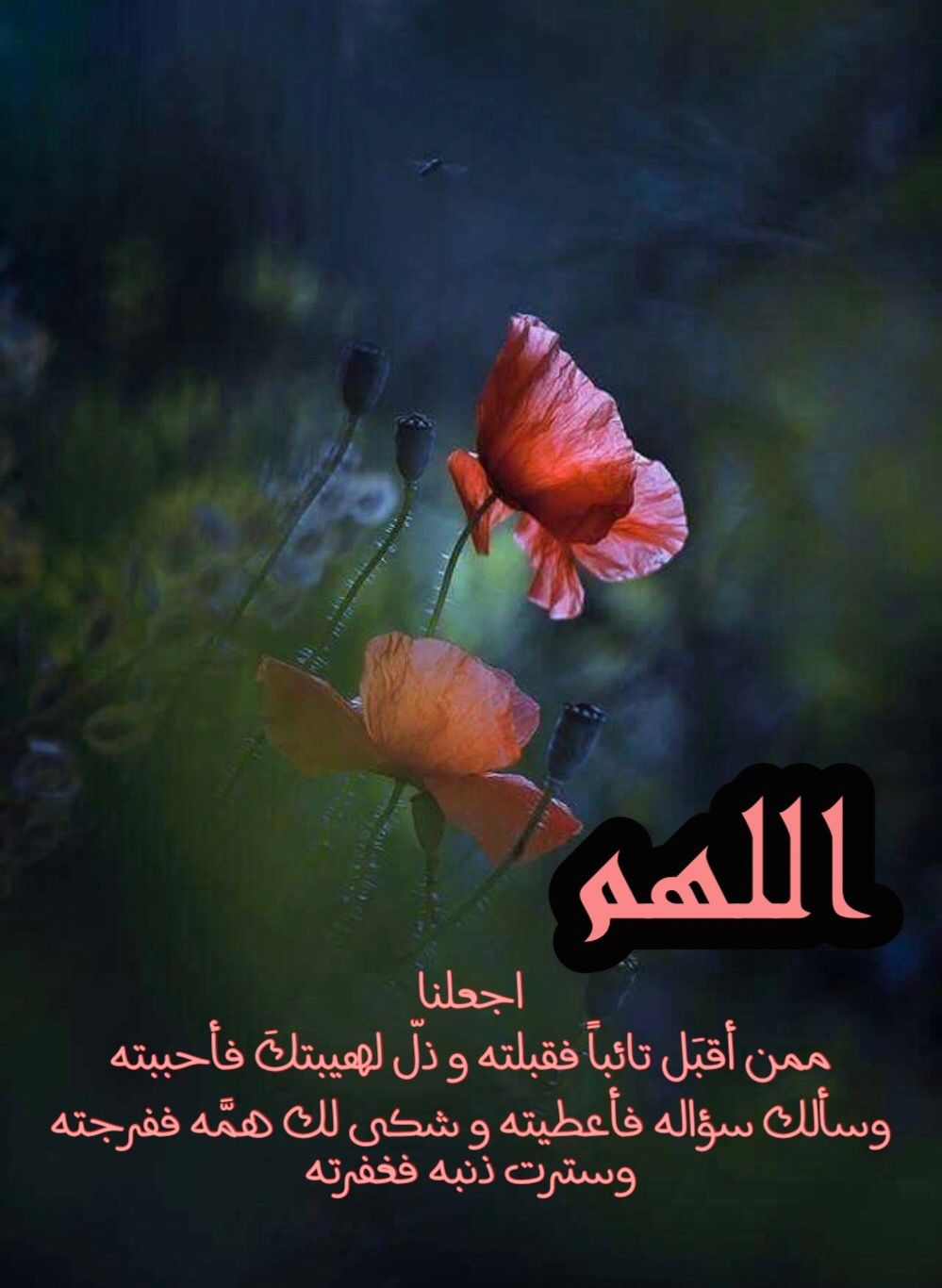 Pin By Bilssan Rim On دعاء Arabic Jokes Arabic Quotes Islam Hadith