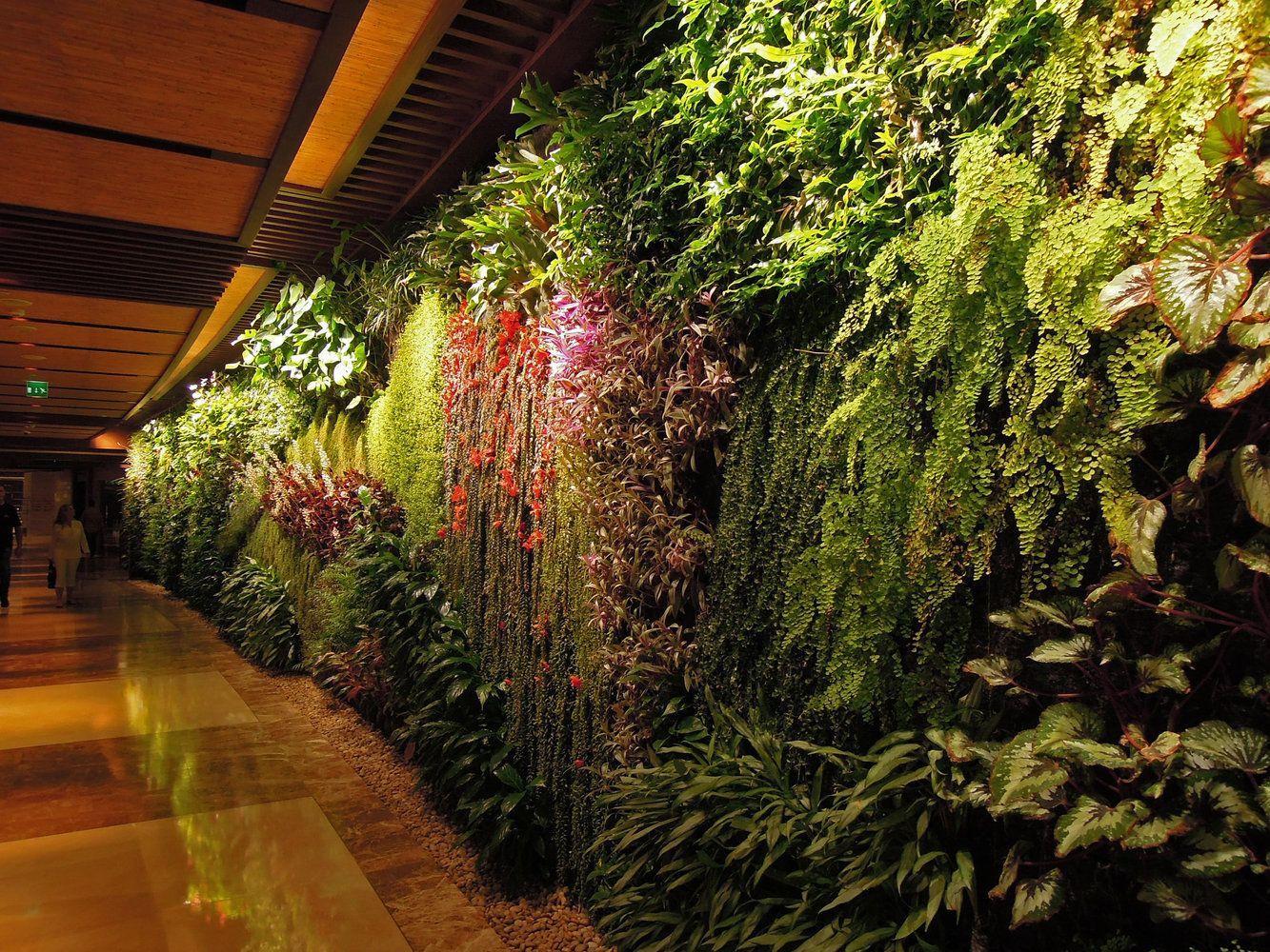 Vertical Garden in the corridor, Sofitel Palm Jumeirah, Dubai ...