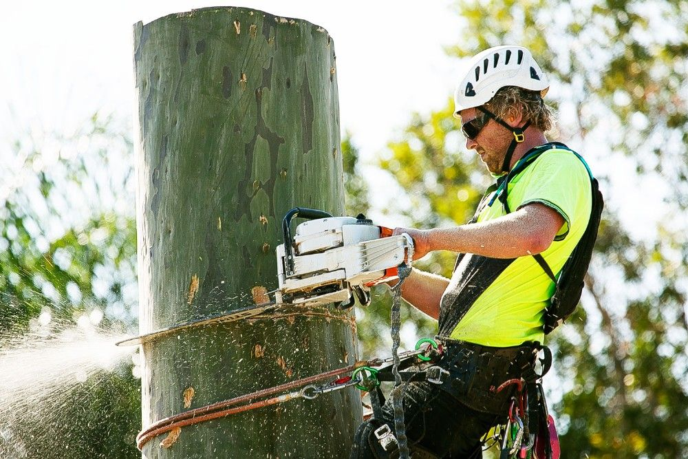Get help from arborist Tree Removal Adelaide Tree