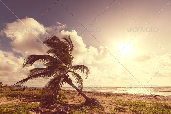 Realistic Graphic DOWNLOAD (.ai, .psd) :: http://hardcast.de/pinterest-itmid-1006819506i.html ... Tropical beach ...  adventure, asia, bay, beach, coast, destination, holiday, leisure, nature, ocean, palm, resort, sand, sea, serenity, shell, shore, sri lanka, summer, travel, tree, tropical, vacation, waterside, waves  ... Realistic Photo Graphic Print Obejct Business Web Elements Illustration Design Templates ... DOWNLOAD :: http://hardcast.de/pinterest-itmid-1006819506i.html
