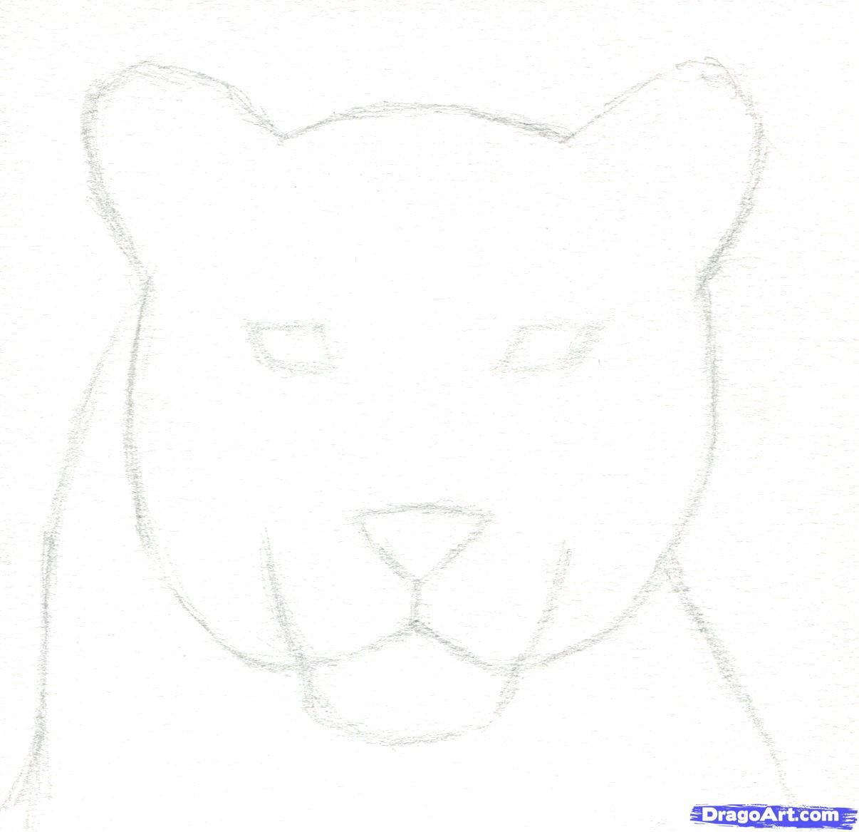 how to draw a black panther realistic panther