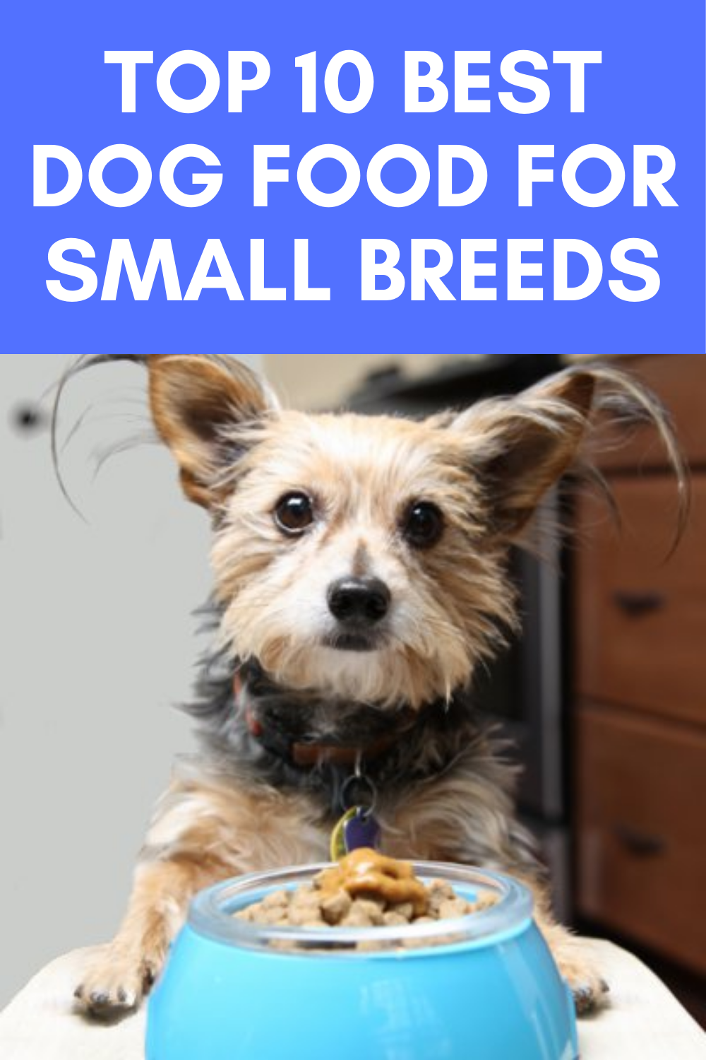 Top 10 Best Dog Food For Small Breeds In 2020 Small Breed Dog Food Best Dog Food Dog Food Recipes
