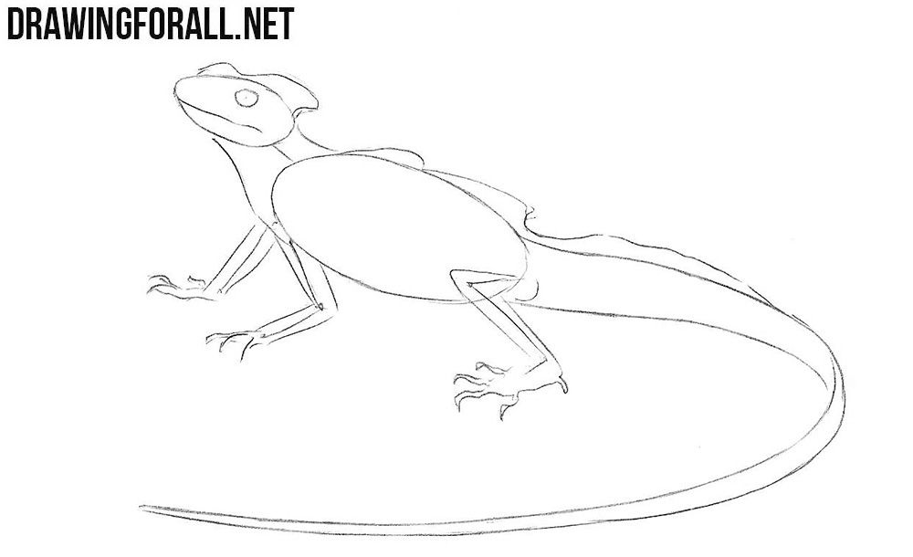 Learn To Draw A Basilisk Lizard Step By Step Drawings Basilisk Lizard Graphic Novel Illustration