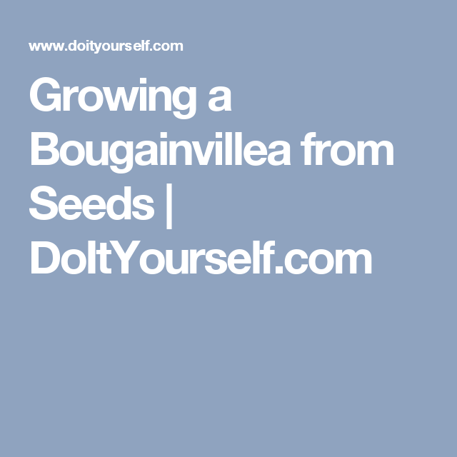 Growing a Bougainvillea from Seeds | DoItYourself com | Gardening