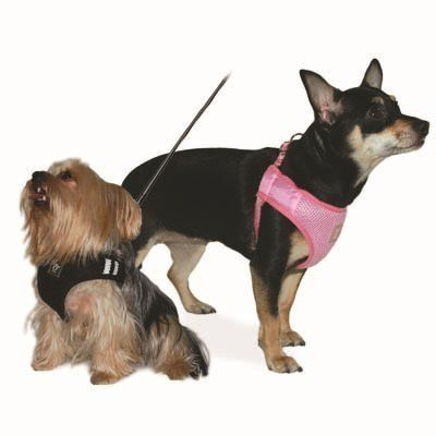 Dogo Supergo Basic Harness Pinksmall For More Information