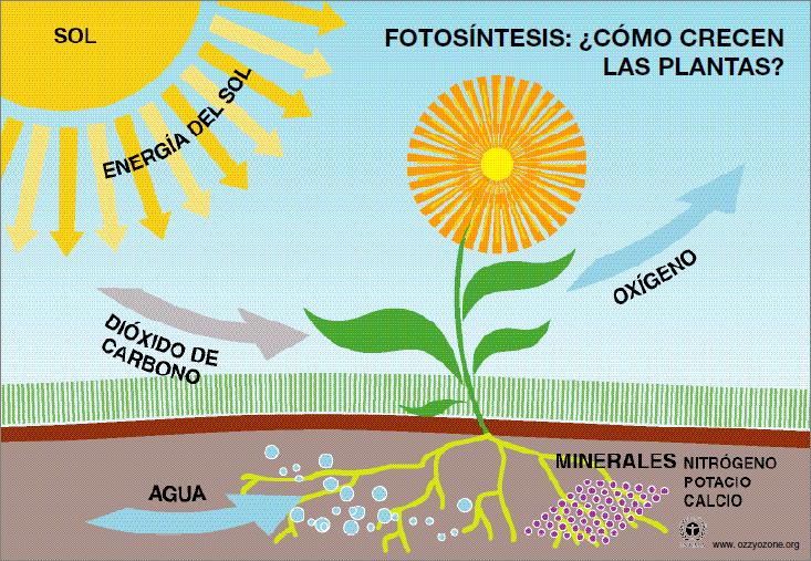 Fotosintesis Dibujo Buscar Con Google Fotosintesis Y Respiracion La Fotosintesis Para Ninos Fotosintesis
