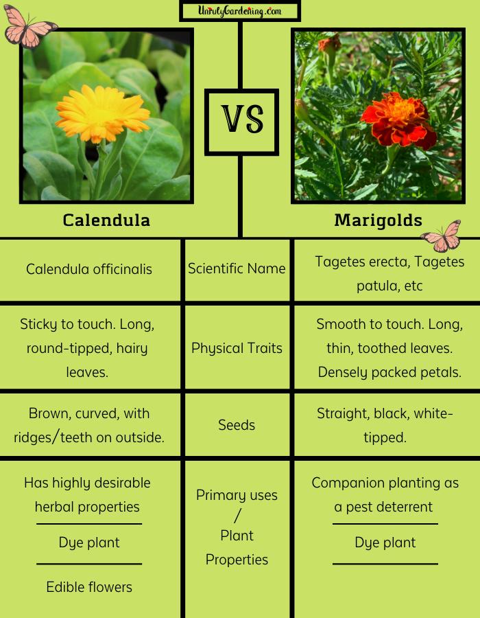 Calendula Vs Marigolds The Differences Calendula 400 x 300