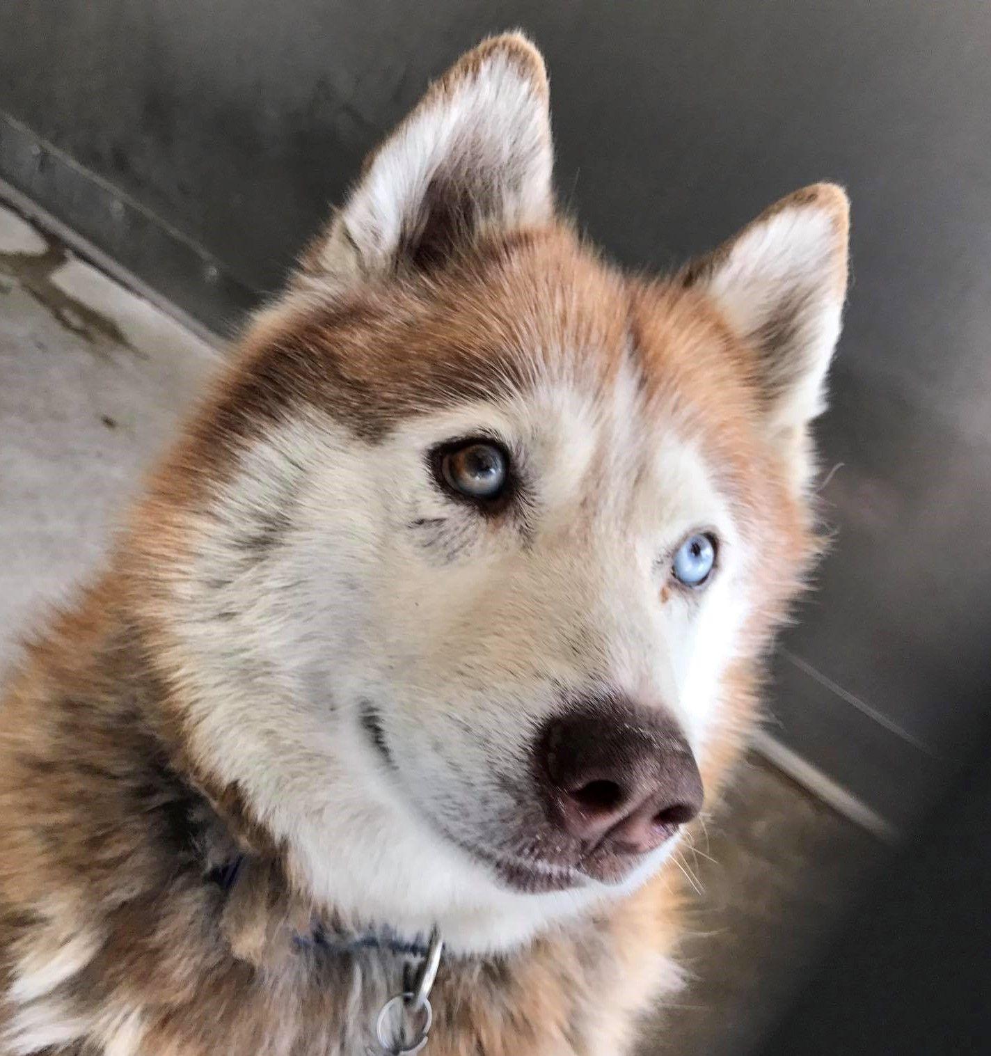 11++ Kent wa animal shelter ideas in 2021