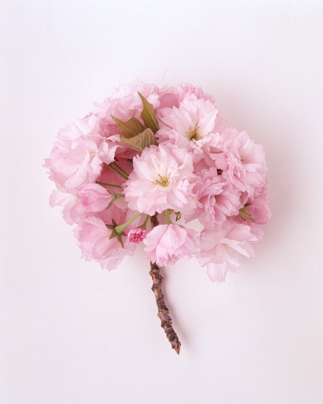 Your Ultimate Guide To Flower Meanings Flower Meanings Cherry Flower Language Of Flowers