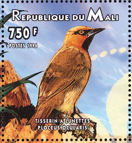 Spectacled Weaver stamps - mainly images - gallery format