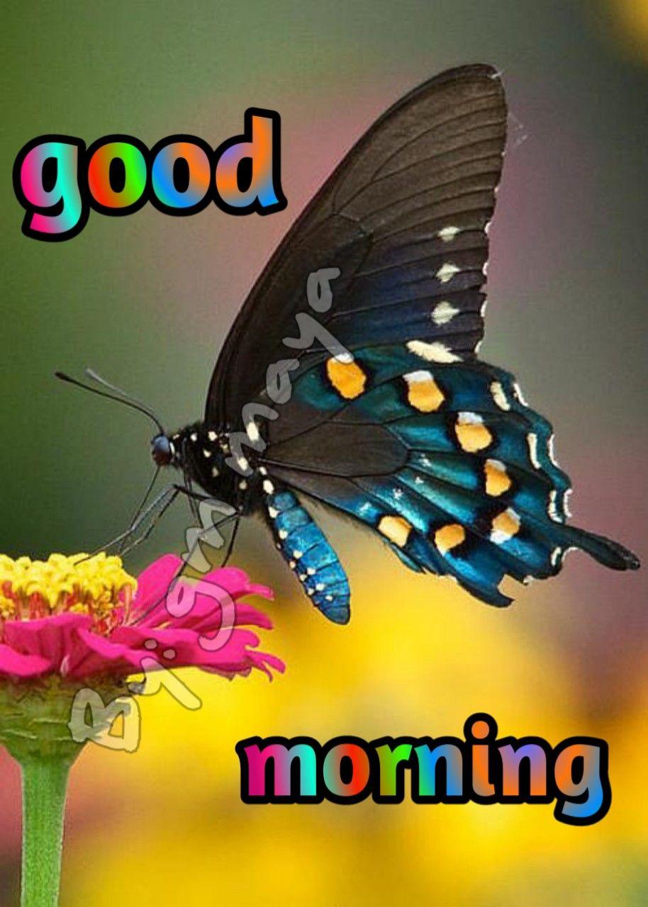 Pin By Nitheesh Kumar On Love In 2020 Cute Good Morning Morning