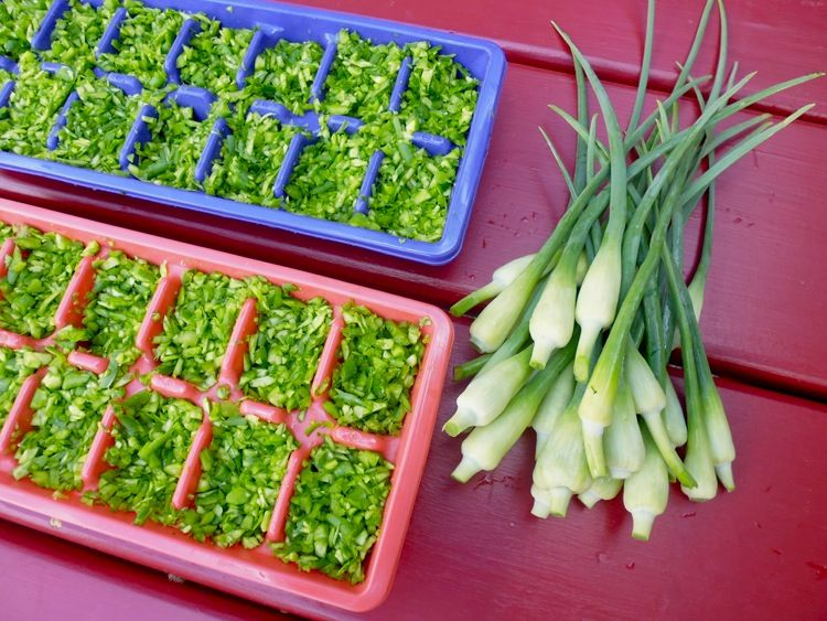Garlic scapes chop now use later scape recipe