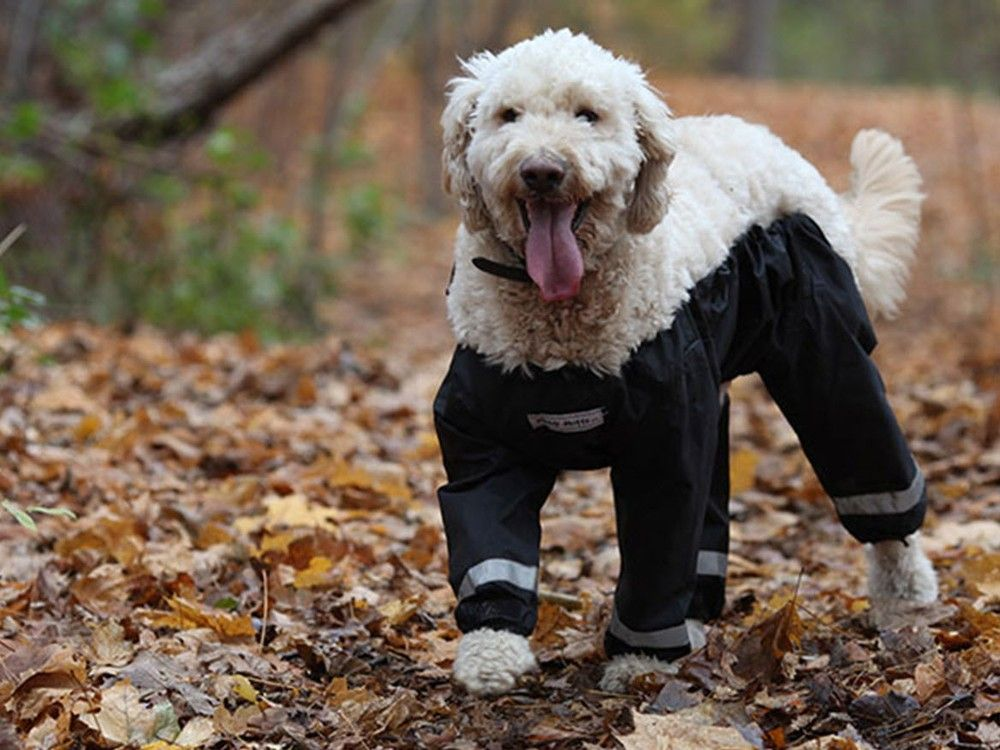 Ottawa Company Steps Into Dogged Pants For Pups Debate Dog Pants