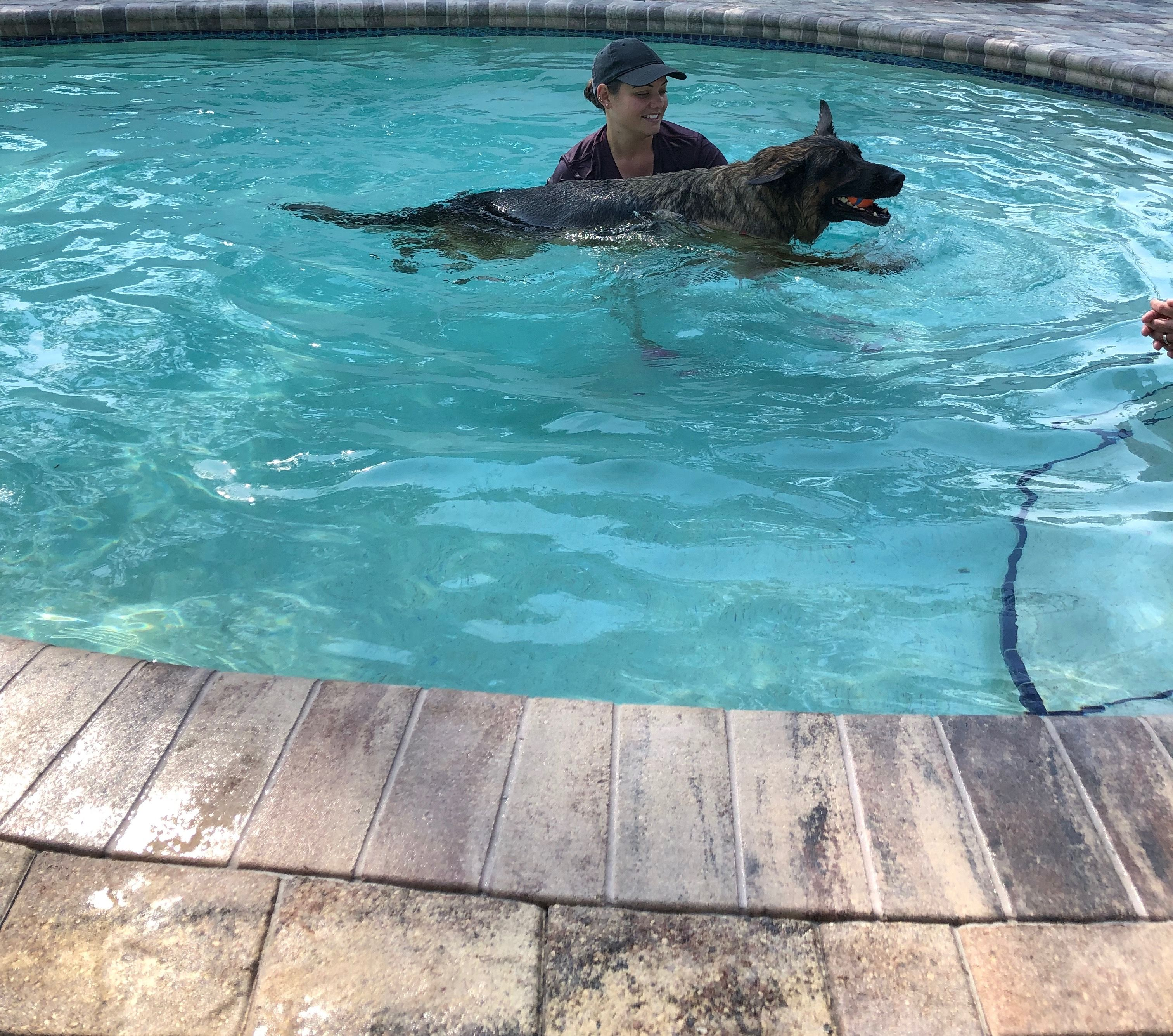 Vader A German Shepherd Swims To Heal From His Back Surgery Hydrotherapy Strengthens His Joints And Helps Regrow Lost Mus Hydrotherapy Swimming Workout Dogs