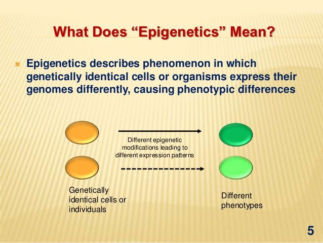 Epigenetics mediated gene regulation in plants Biblical - new blueprint gene expression