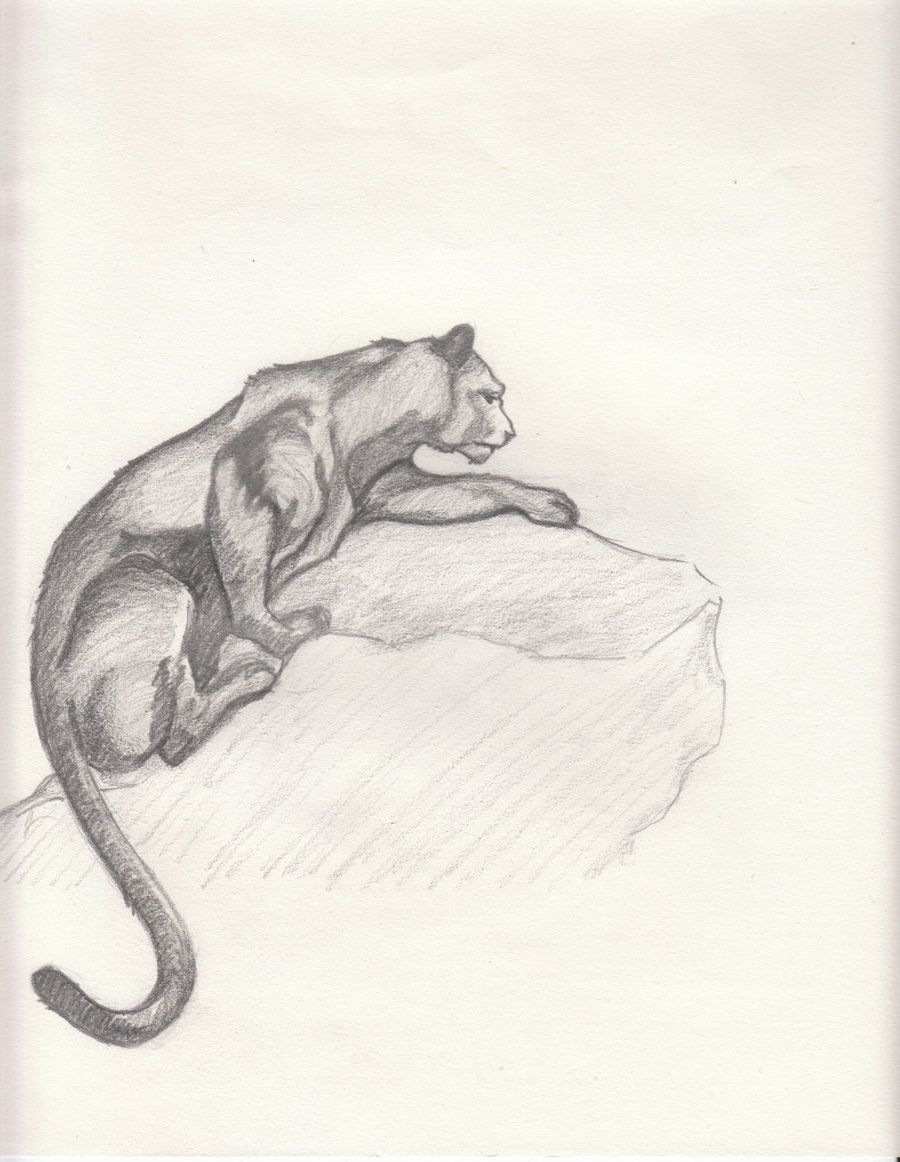 Mountain Lion Drawings With Images Lion Sketch